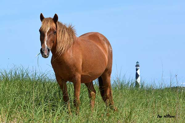 Horse with lighthouse in background